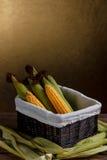 原始玉米棒的玉米 库存图片