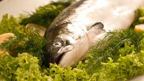 原始的三文鱼蔬菜 库存图片