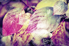 原始的五颜六色的自然背景 明亮的秋季叶子 免版税库存照片