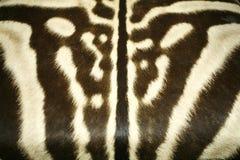 原始的斑马皮肤的黑白纹理样式 库存图片
