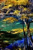 原始的森林的美好的风景 免版税库存图片