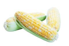 原始的玉米壳 库存图片
