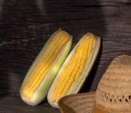 原始的玉米 库存图片