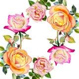 绘原始的现实愉快的玫瑰的明信片五颜六色的花水彩 图库摄影