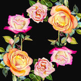 绘原始的现实愉快的玫瑰的明信片五颜六色的花水彩 库存照片