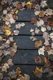 原始的秋天叶子 库存照片