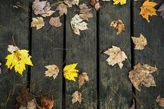 原始的秋天叶子 库存图片