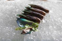 原始的蛤蜊 图库摄影