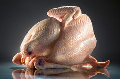 原始的鸡 免版税图库摄影