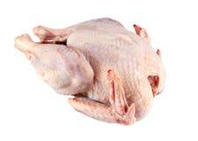 原始的鸡 免版税库存照片
