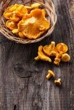 原始的黄蘑菇 库存照片