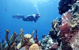 原始礁石 库存照片