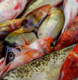 原始背景的鱼 免版税库存图片