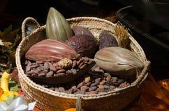 原始豆的可可粉 免版税库存照片