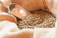 原始豆的咖啡 免版税库存照片