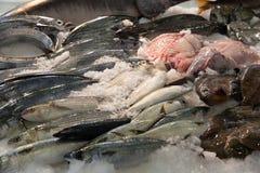原始逆的鱼市 库存照片