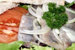 原始鲱鱼的莴苣 库存图片