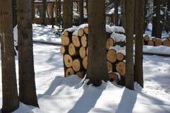 原木台在冬天森林里 免版税库存图片