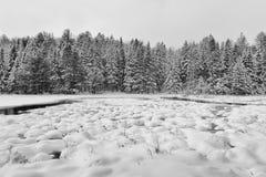 原野公园的冬天风景 免版税库存照片