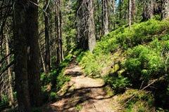 原野足迹,国家公园黑森林,亚丁乌特姆博格,德国 免版税图库摄影