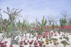 厦门植物的公园 免版税库存照片