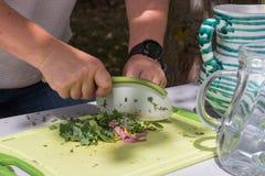 厨师健康烹调的切好的草本 图库摄影