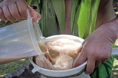厨师岛民人在拉罗通加库克群岛准备卡瓦饮料 免版税库存图片