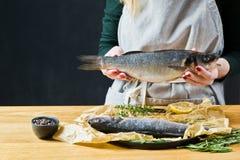 厨师拿着鲈鱼 黑背景,侧视图,文本的空间 图库摄影
