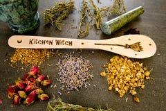 厨房巫婆-匙子用在灰色/灰色板岩背景的干草本-春黄菊,木槿,山金车,长辈花,起来了芽和 免版税库存图片