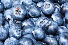 厨房设计的蓝莓背景 免版税图库摄影