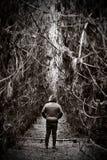 去密集的饰面形象森林路径 库存图片