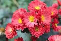 去年秋天花在庭院里开花 图库摄影