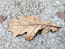 去年` s在花岗岩边路的橡木叶子 库存图片