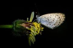 去微小的蝴蝶睡 库存图片