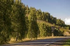 去横跨山和绿色森林的柏油路 树和他们的阴影在草 与天空蔚蓝的晴朗的夏日 ural 库存照片