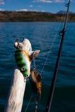 去的概念捕鱼 库存图片