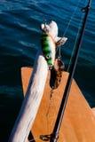 去的概念捕鱼 免版税图库摄影