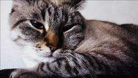 去的猫与她顶头按睡 股票录像