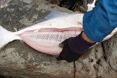 去骨切片在岩石的渔夫一条大鱼 库存图片