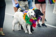 参加斯德哥尔摩骄傲游行的黑白狗 免版税库存图片