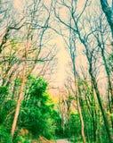 参天的森林 库存图片