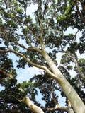 参天的结构树 库存图片