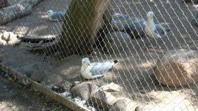 参观动物园 股票视频