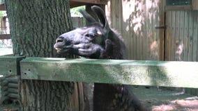 参观动物园 股票录像