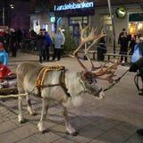 参观在大街上的驯鹿 免版税库存照片