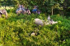 参观大象后面的游人密林  免版税库存照片