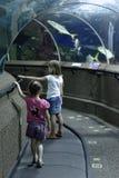 参观海水族馆的孩子 免版税库存图片