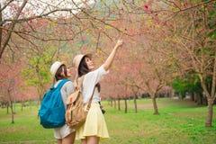 参观著名樱桃树的年轻女性背包徒步旅行者 库存照片