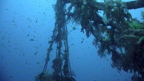 参观击毁Giannis D,红海, Sharm El谢赫,埃及的潜水者 股票录像