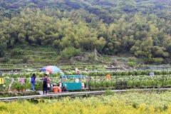 参观yangmingshan山的游人水芋百合托儿所 免版税库存图片